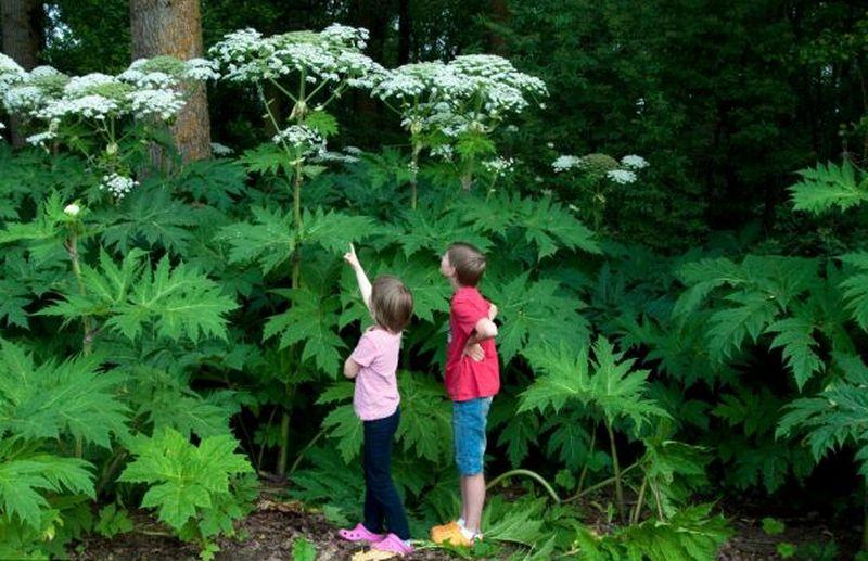 Дети и огромные растения
