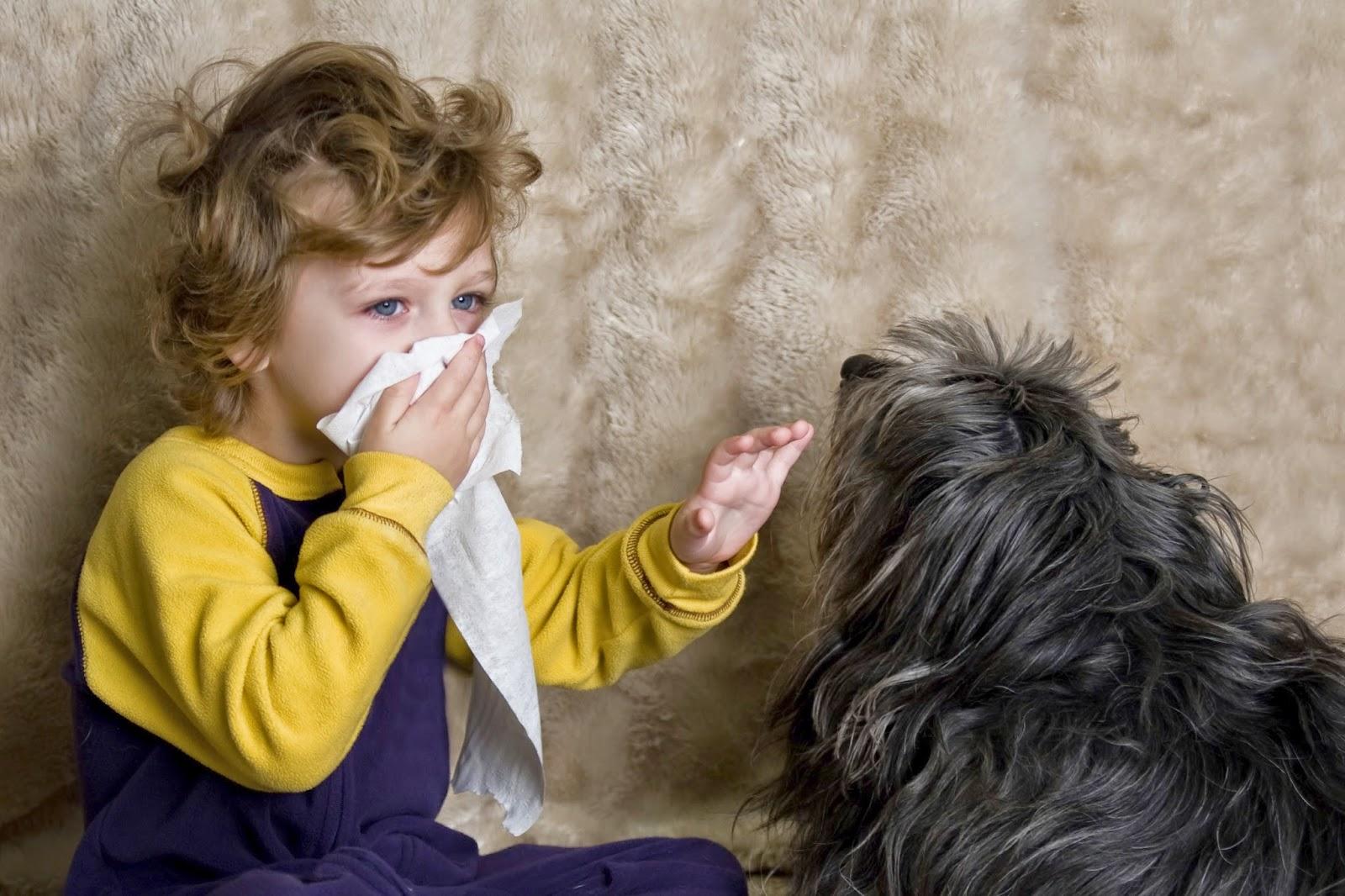 Шерсть аллергия