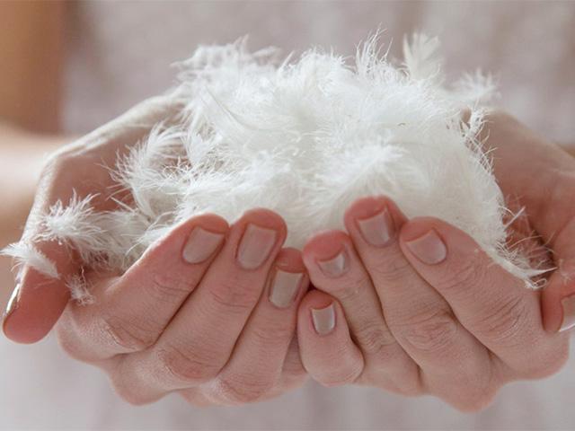 Аллерген в виде перьев