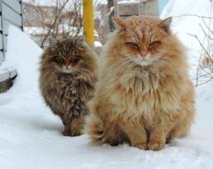 Прогулка двух кошек