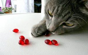Кот и витамины