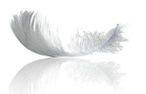 Перо птицы