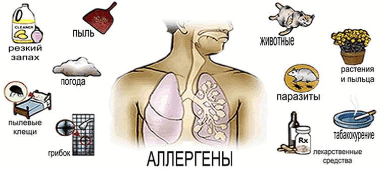 окружающие аллергены