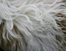 Причины и симптомы аллергии на шерсть животных