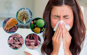 Пылевой клещ: как избавиться в домашних условиях, симптомы аллергии, лечение