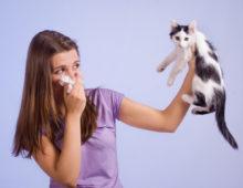 Кошка как причина заболевания