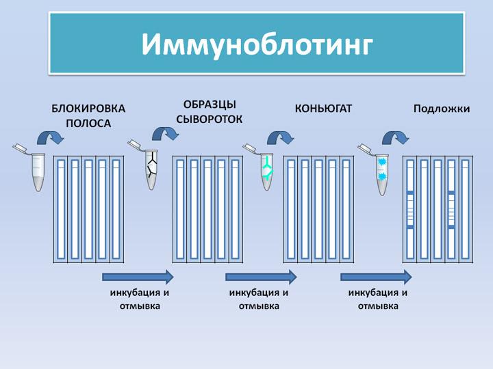 Метод иммуноблотинга