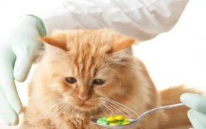 Лекарства и животное
