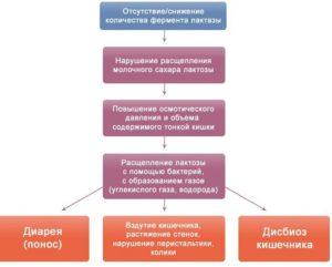 Механизм непереносимости лактозы