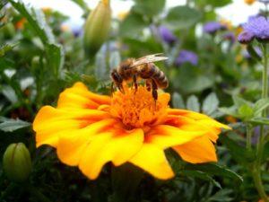 Пыльца цветов