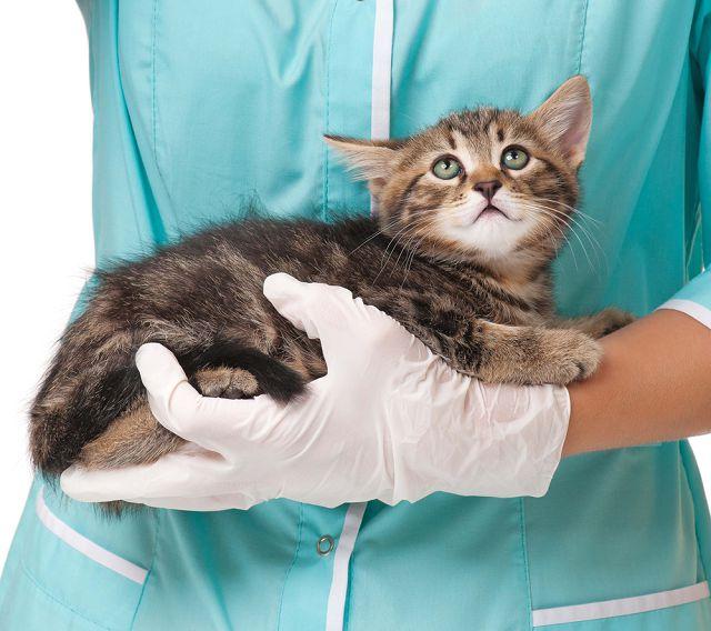 У ветеринара котенок