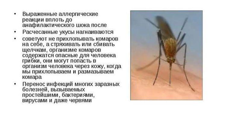 От аллергии от укусов насекомых
