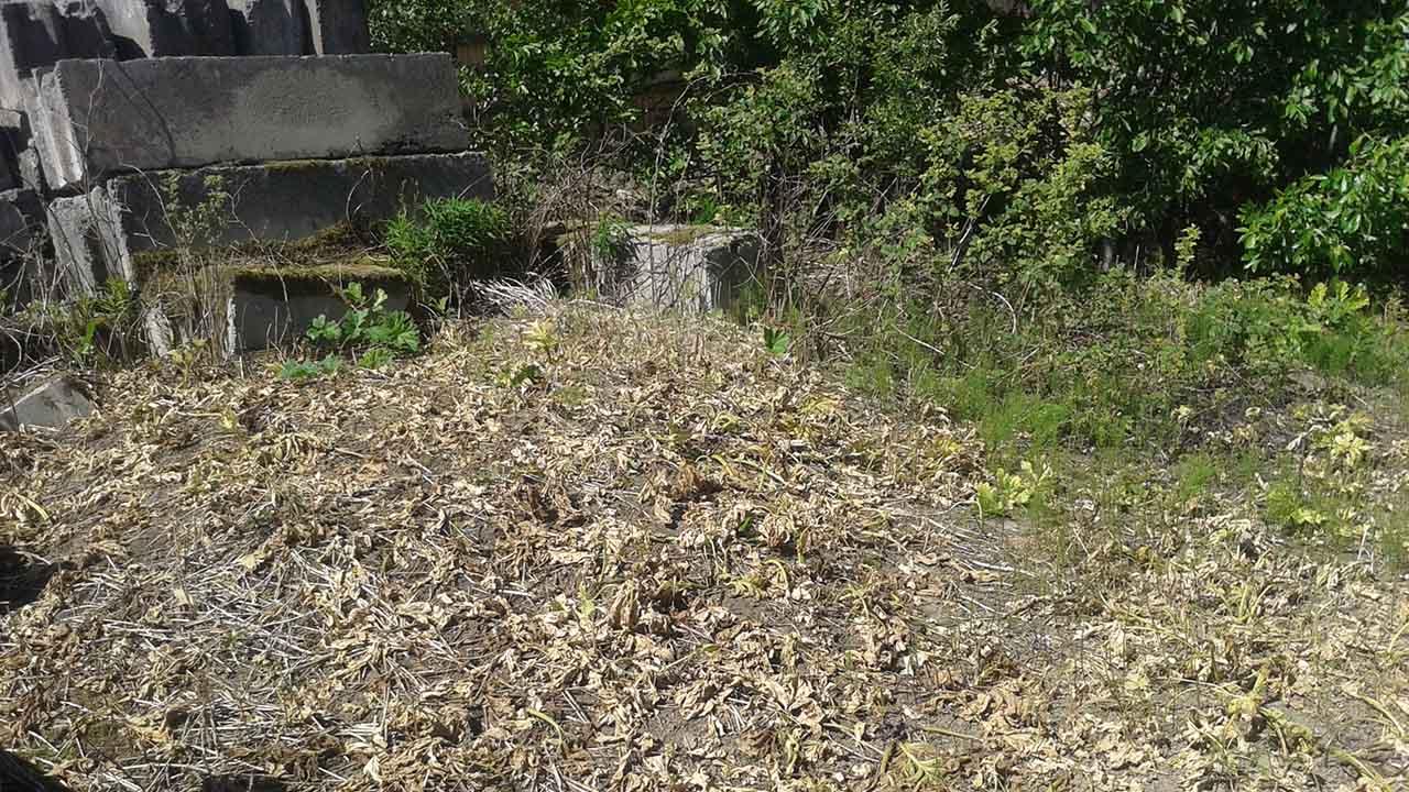Уничтожение растения