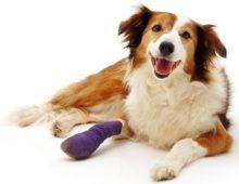 Пододерматит у собак