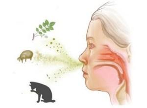 Причины респираторной аллергии